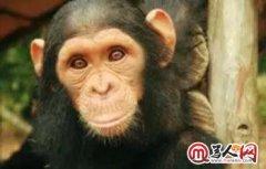 骂人词汇骂人剧情 绿茶婊过时了现在骂人可以用bonobo